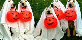 Dog Halloween safety tips – 7 ways to keep your pets out of harms way