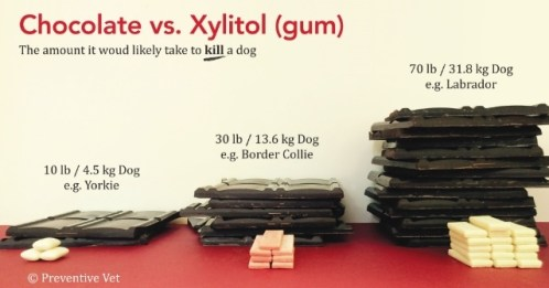 xylitol poisoning