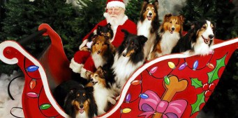 Seattle area weekend dog events – Friday, December 25 – Sunday, December 27