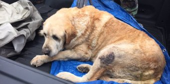 Rescue of two Texas dogs buried in rubble for two days after tornado will make your day
