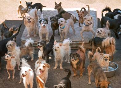 This picture taken by The Olympia shows just a fraction of the 85 dogs that were at Sharon Gold's residence. Photo from theolympian.com.