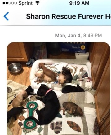 This is the litter of 9 puppies at Furever Rescue on Jan. 4. The fat, healthy puppy at the bottom right is the same as the skinny one above. Photo from Forever Homes rescue.