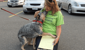 Spay/Neuter Services Available for Low Income Dog Owners in Snohomish County
