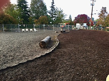 Haley played fetch on the narrow strip of wood chips in the park. It's about half the length of the ball field where we normally go. Photo from Seattle DogSpot.