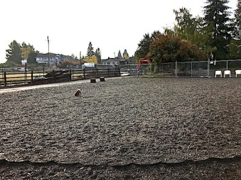 More than half of Magnolia Manor OLA is covered with rocks which make it difficult for larger dogs to maneuver. Photo from Seattle DogSpot.