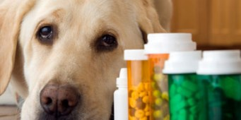 King County Now Offers Prescription Drug Discount Program for Pets (and People)