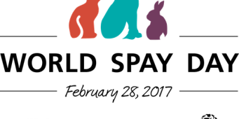 Seattle Animal Shelter Will Offer Free Spay/Neuter Surgeries to Celebrate World Spay Day