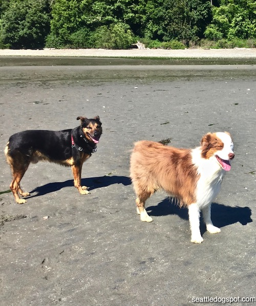 Dogs at Beach on Whidbey Island