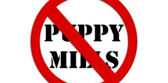 Bremerton Bans Pet Stores from Selling Dogs from Puppy Mills