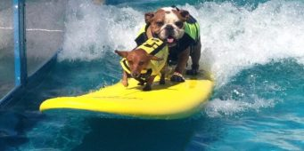 Your Dog Can Ride the Gnarly Crankin' K-9 Wavemaker Outside Safeco Field Tonight