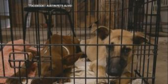 Seattle Humane Society Will Take In Up to 300 Pets from Texas Shelters
