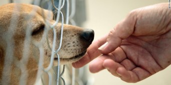 Think Before You Share Disturbing Dog Images