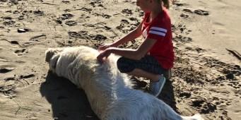 Seattle Area Weekend Dog Events: Friday, September 14 – Sunday, September 16