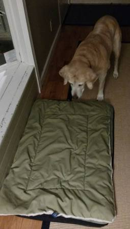 """Teaching your dog the """"place"""" command"""