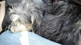 Scalawaggles Pet Rescue Adopts Out Sick Dog