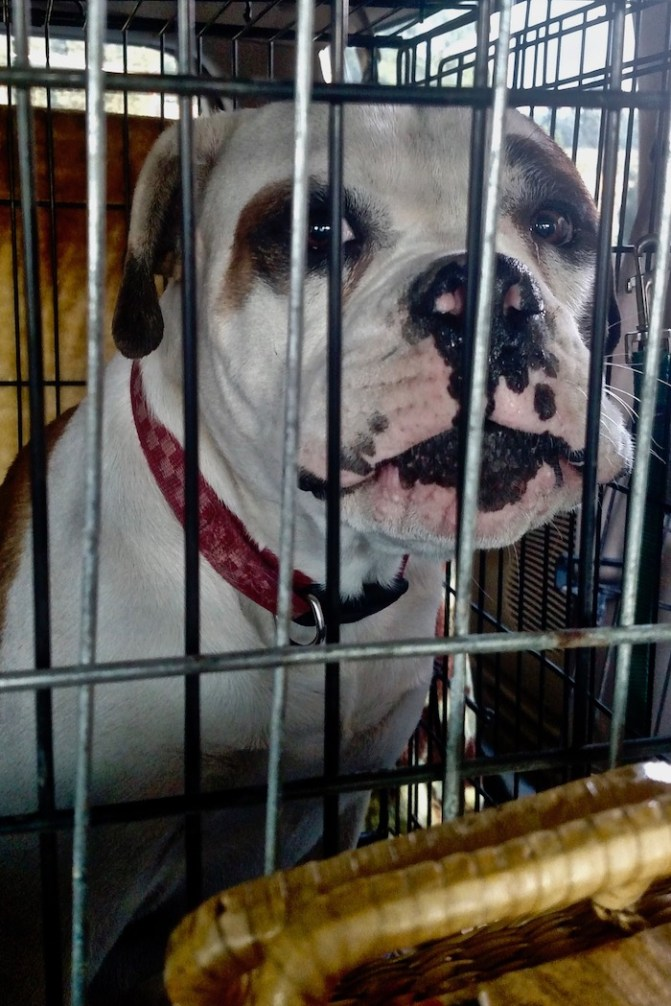 Eyewitness Says Founder Of Fake Dog Rescue Beatkilled Misbehaving