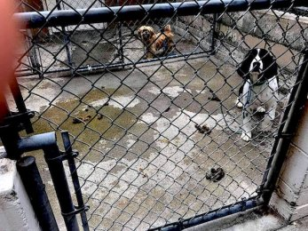 Academy of Canine Behavior Abuses Dogs