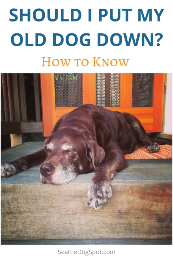 How to Know When It's time to Put Down Your Old Dog