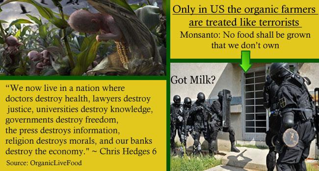 GMO-seeds-crops