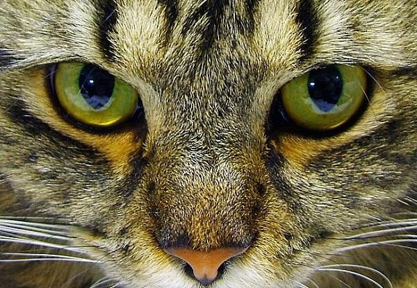 green feline glare