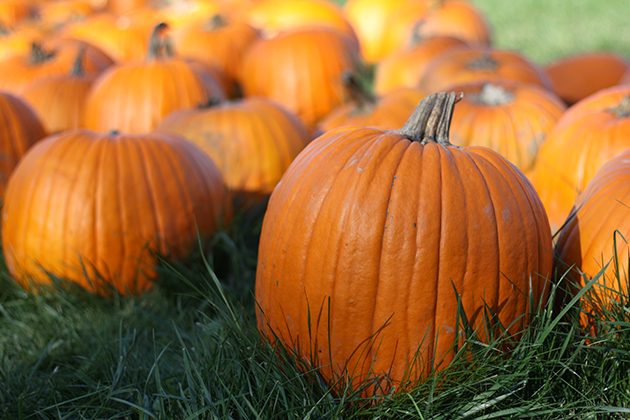 equinox pumpkin image