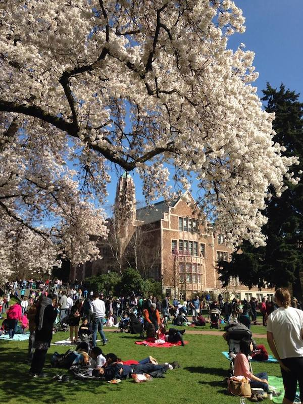 This Is What It Means To Say Hanami in Seattle