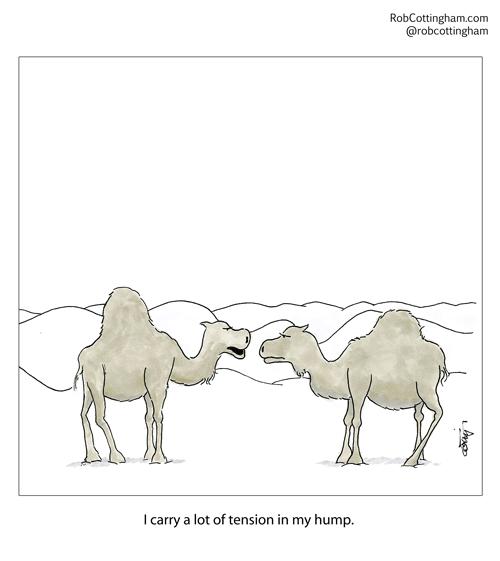 2014.11.02.camels