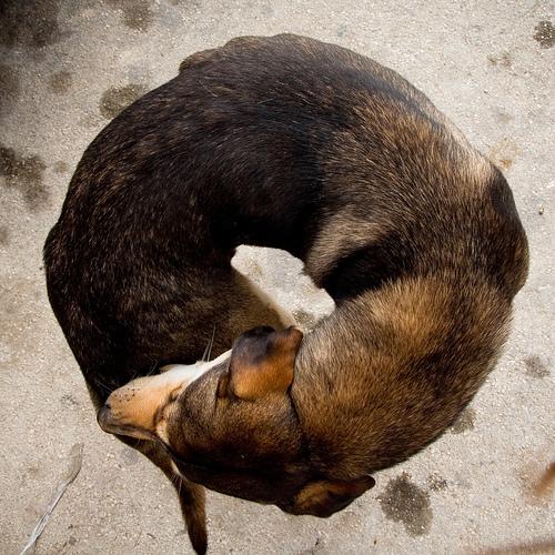The unheard voice of homeless dog