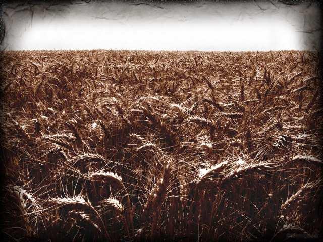Photo: torange.biz