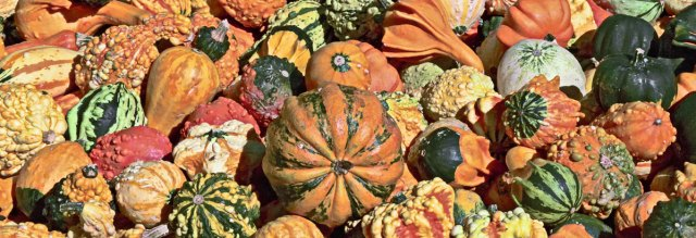 pumpkins-sm