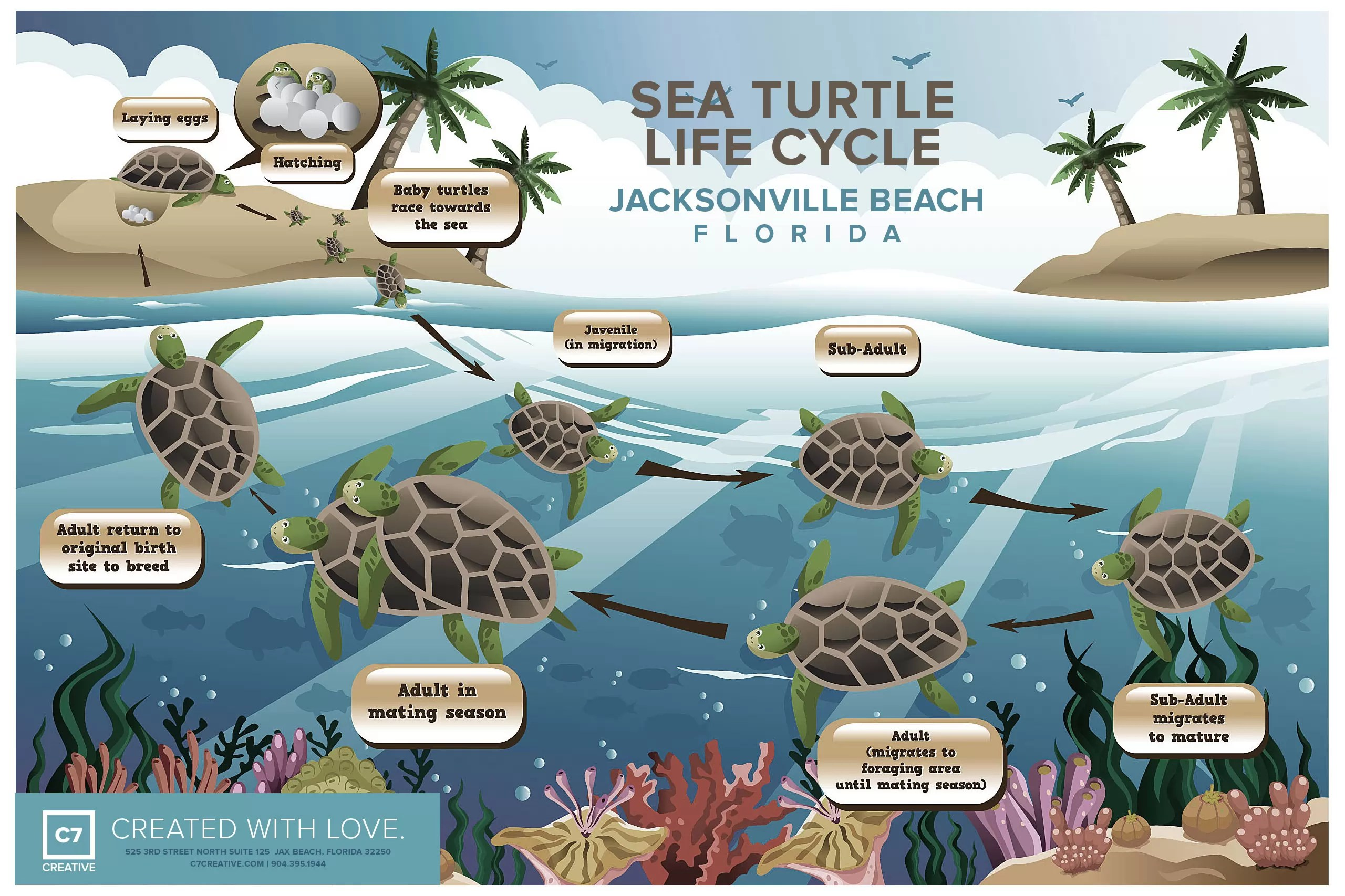 Sea Turtles