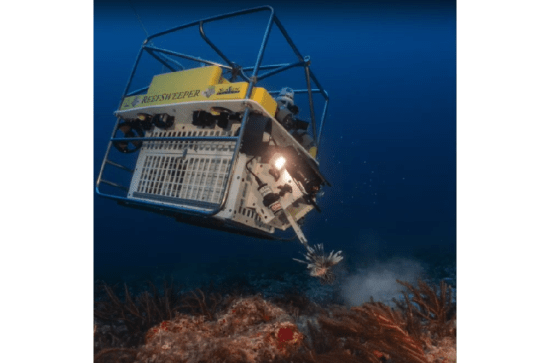 SeaView Systems' Reefsweeper, a lionfish catching robotic remote operated vehicle (ROV) is shown catching a Lionfish in the Caribbean.
