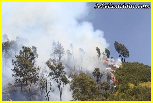 Permalink to Kebakaran Hutan Sering Terjadi di Wilayah Indonesia