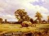 a-warwickshire-hayfield