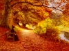 a-wooded-path-in-autumn