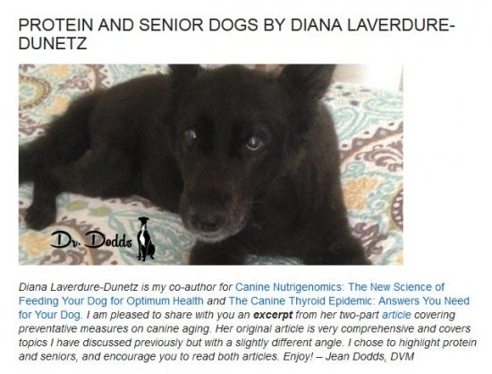 Dr. Dodds: Protein and Senior Dogs