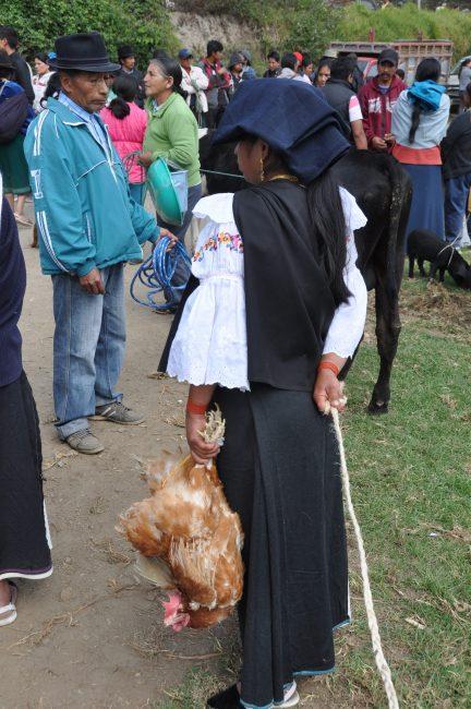 Feria de animales (animal market), Otavalo