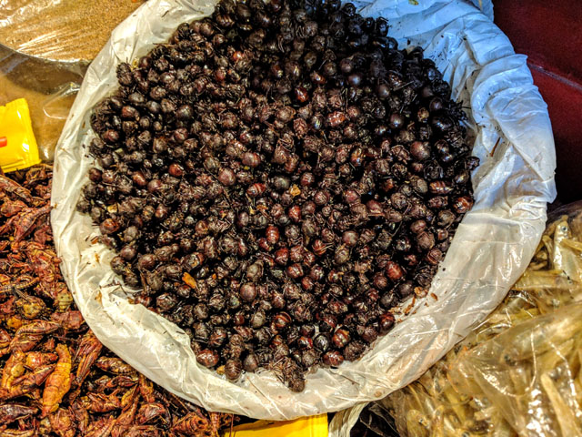 Chicatanas (edible ants)