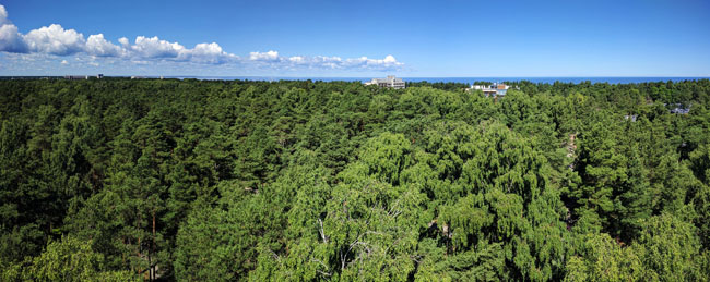 View from forest observation platform, Jūrmala