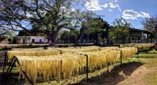 Activities - La Calle Spanish school Merida