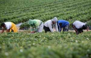 Controlli a tappeto della Gdf in aziende agricole a Crotone