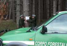 uomini del Corpo Forestale dello Stato sequestrano bosco