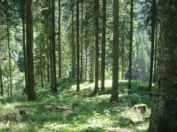Ovaro Cade in un dirupo nel bosco e muore. Corpo rintracciato grazie al cane