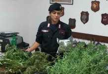 Tre chili di marijuana nella stalla, arrestati due cugini a Isola