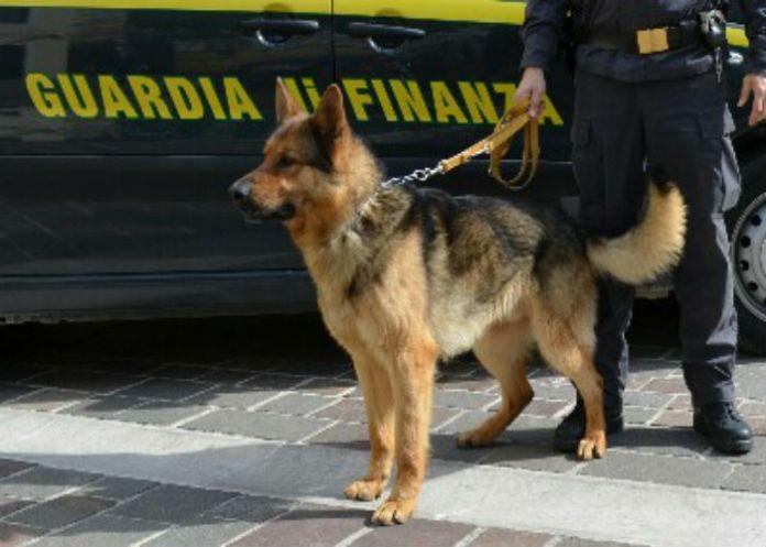 cane antidroga Vacon blocca corriere della droga
