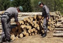 Corpo forestale sequestro legname