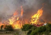 Incendio sterpaglie bosco Roberto Lionetti Bisignano
