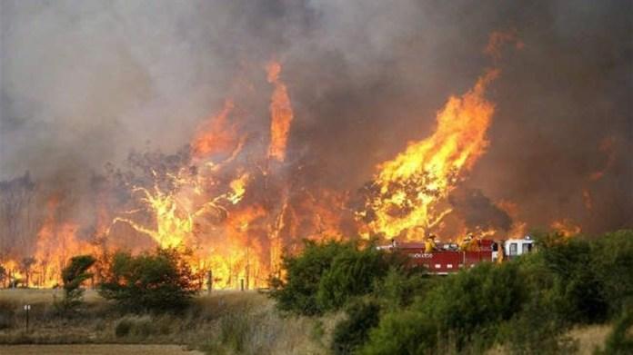 Incendio sterpaglie