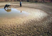siccità allevatori
