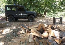 Furti di legna a Mesoraca